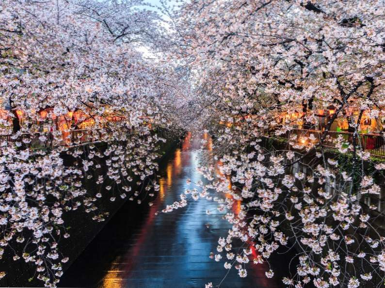 10 best places to see japans famous cherry blossoms