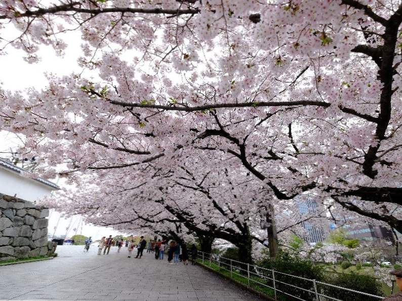 10 best places to see japans famous cherry blossoms 7
