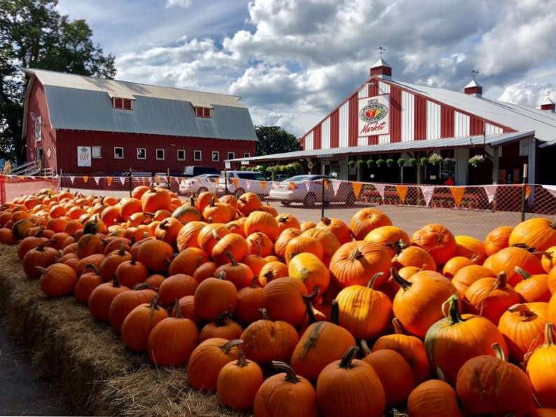 10 best pumpkin patches to celebrate fall in oregon