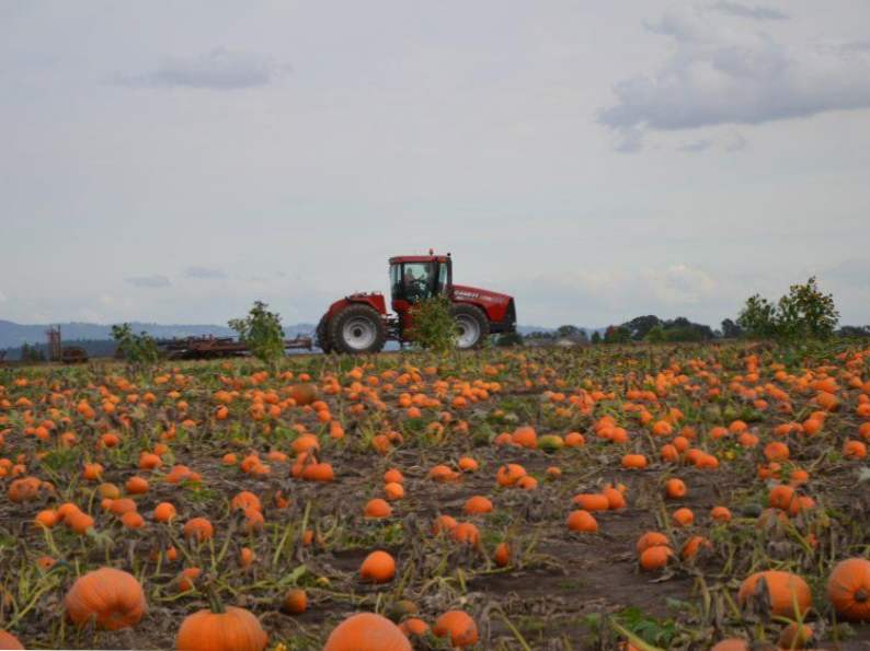 10 best pumpkin patches to celebrate fall in oregon 6