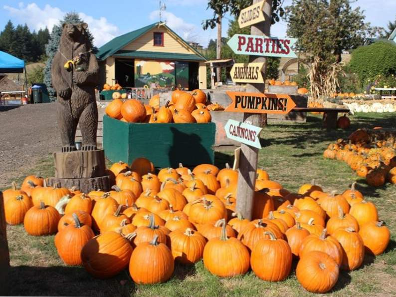 10 best pumpkin patches to celebrate fall in oregon 7