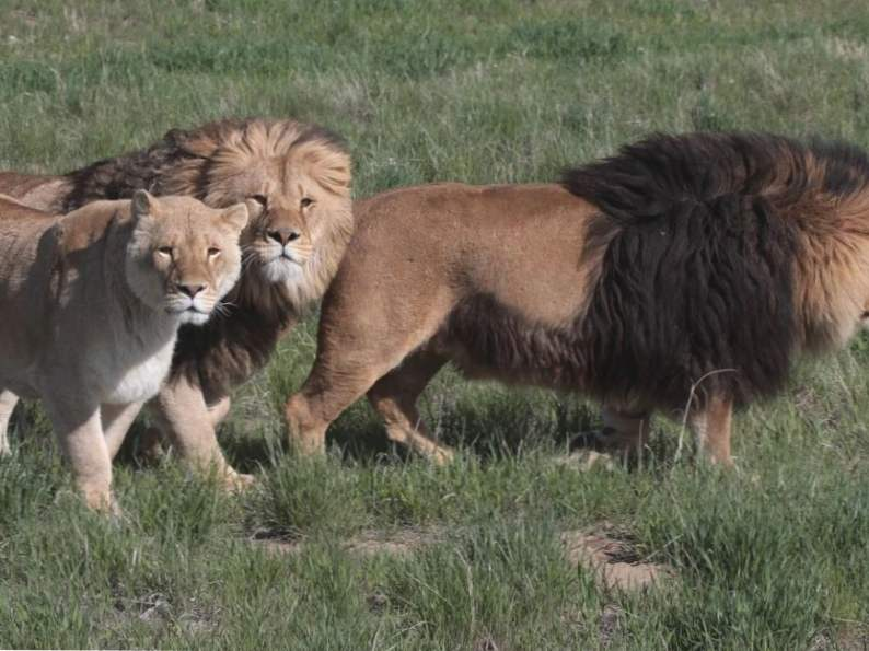 10 top spots to see wildlife in colorado 10