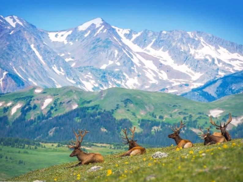 10 top spots to see wildlife in colorado 2