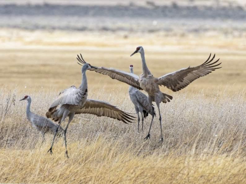 10 top spots to see wildlife in colorado 5