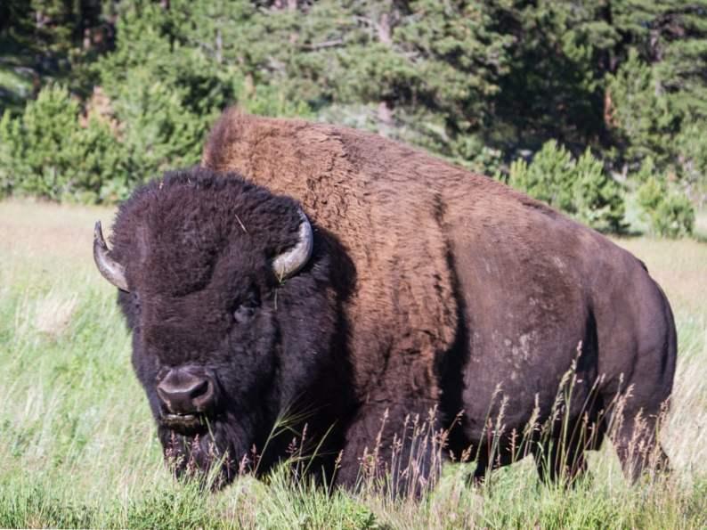 10 top spots to see wildlife in colorado 6