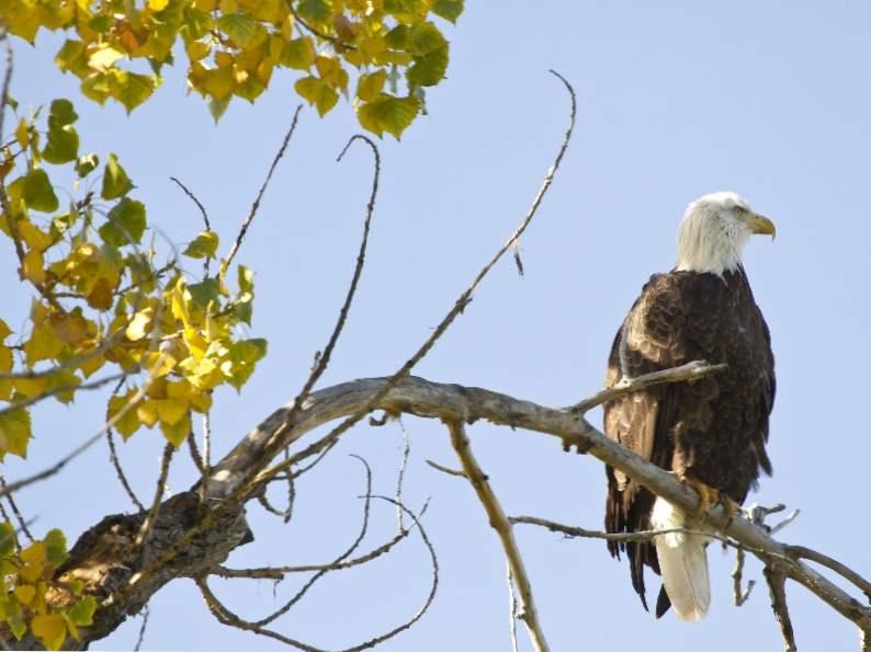 10 top spots to see wildlife in colorado 8
