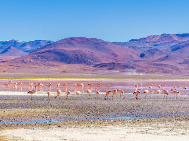 11 best things to do in bolivia 6