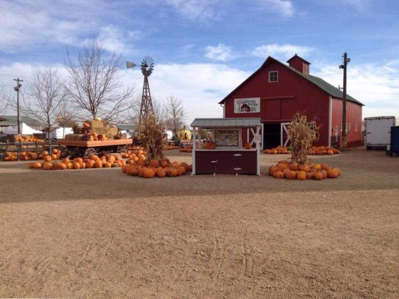 11 colorado pumpkin patches to visit this fall