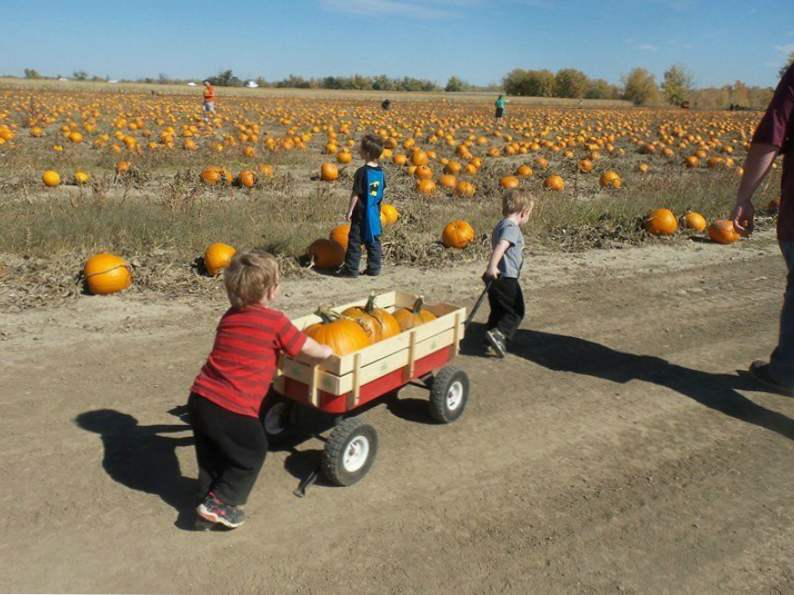 11 colorado pumpkin patches to visit this fall 10
