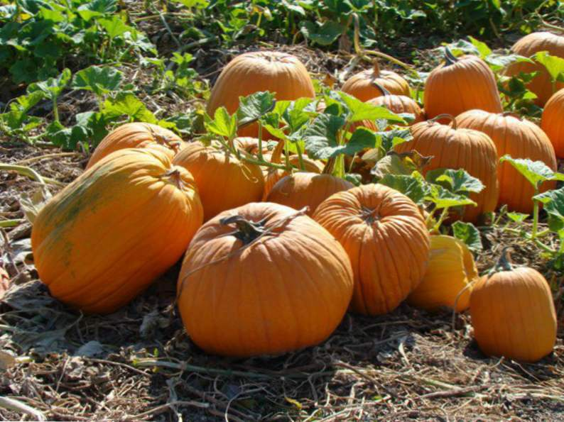 11 colorado pumpkin patches to visit this fall 11