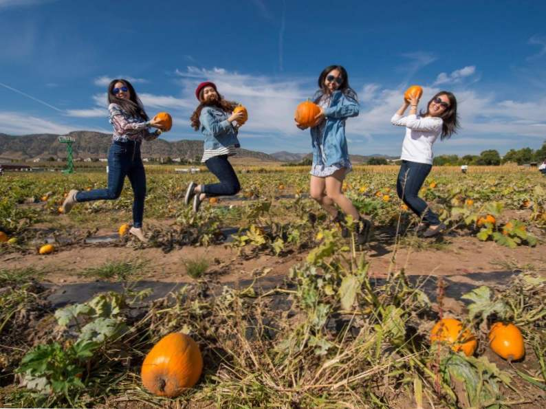 11 colorado pumpkin patches to visit this fall 2
