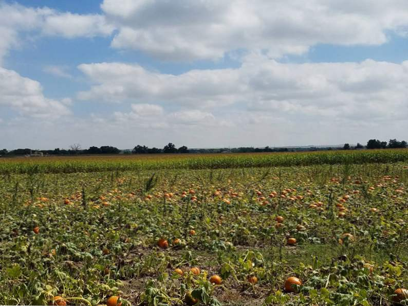 11 colorado pumpkin patches to visit this fall 4