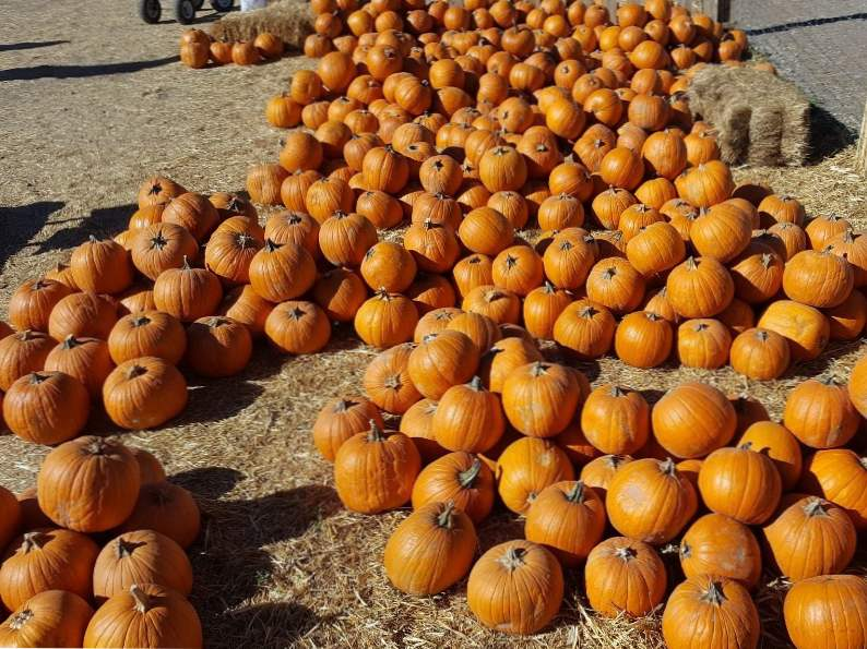 11 colorado pumpkin patches to visit this fall 5