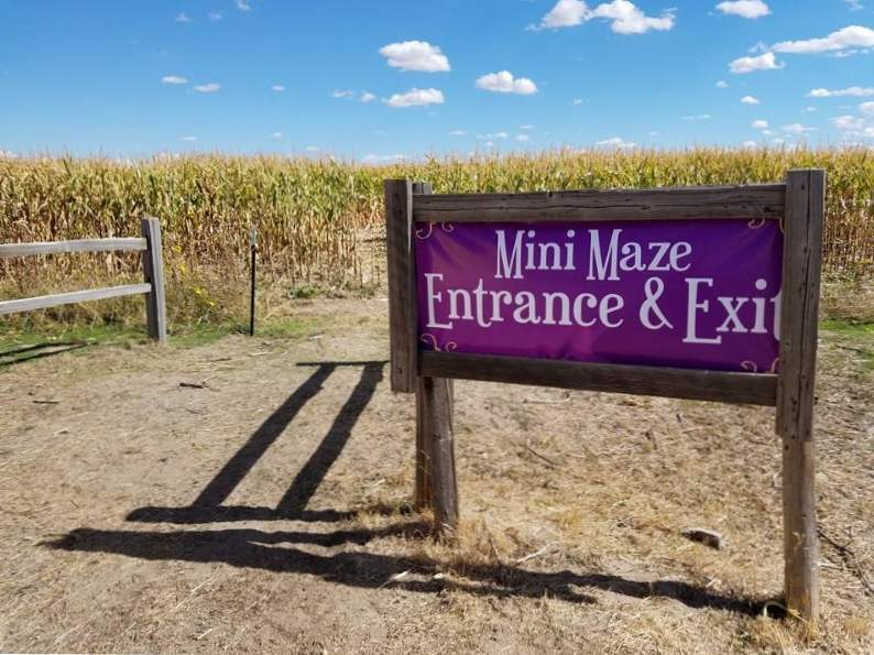 11 colorado pumpkin patches to visit this fall 7