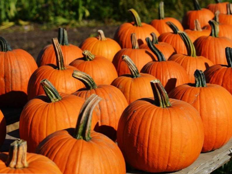 11 colorado pumpkin patches to visit this fall 9