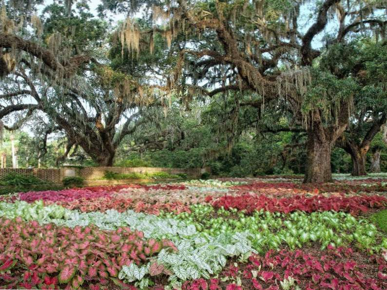 12 best things to do in south carolina 9