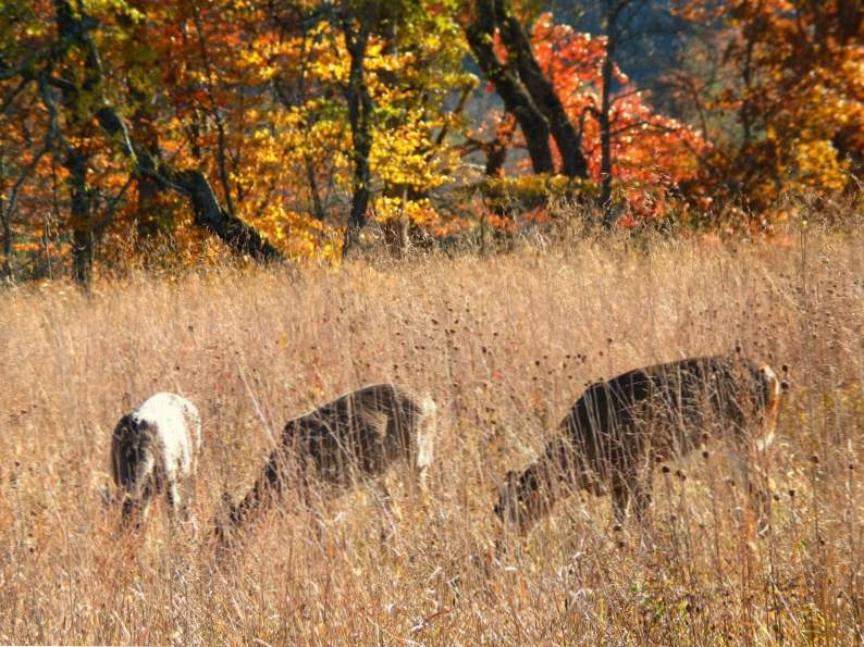 8 best places to view fall foliage in tennessee 2