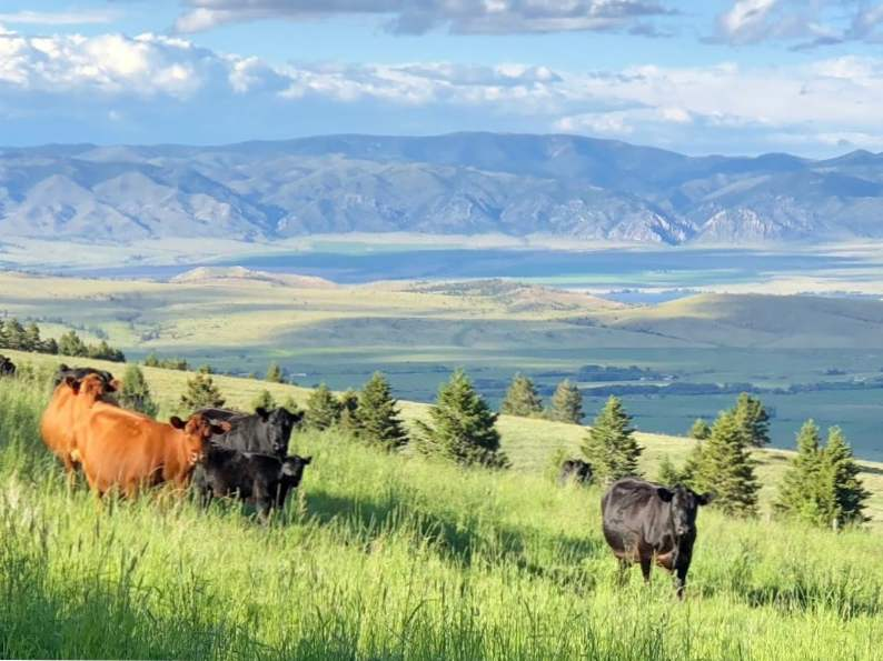 8 best things to do in helena montana 6