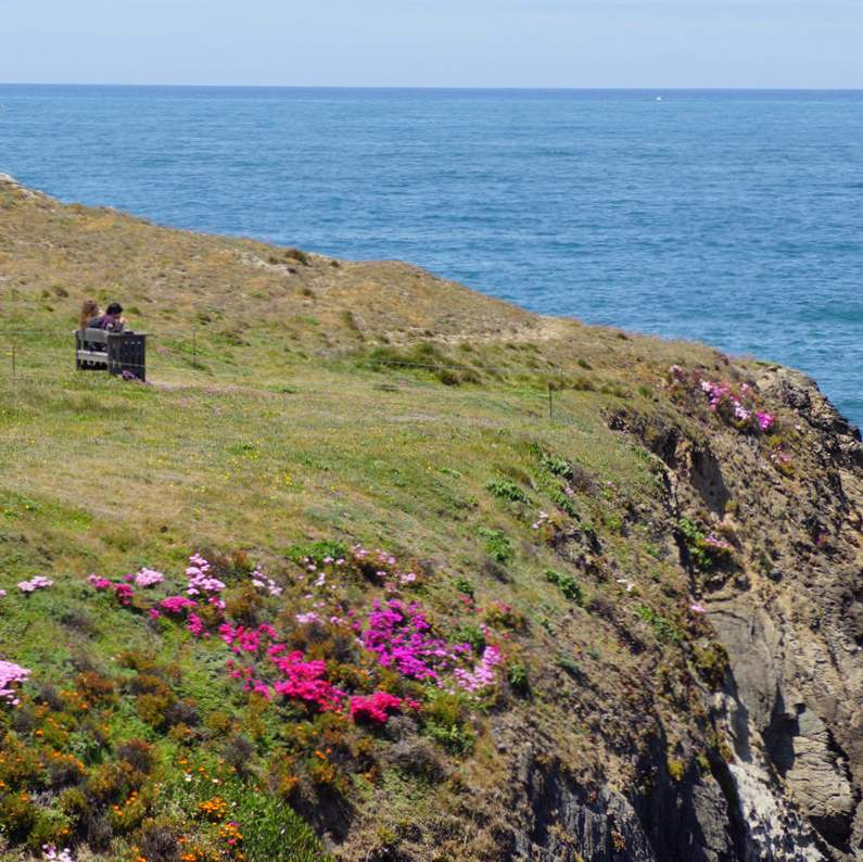 8 best things to do in mendocino california