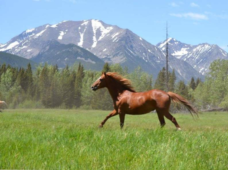 8 montana ranch vacations perfect for a scenic getaway 3