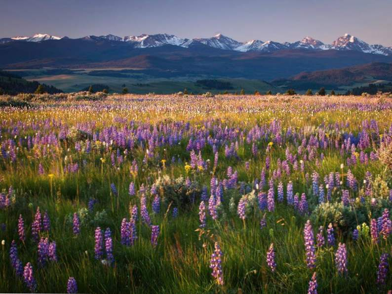 8 montana ranch vacations perfect for a scenic getaway 4