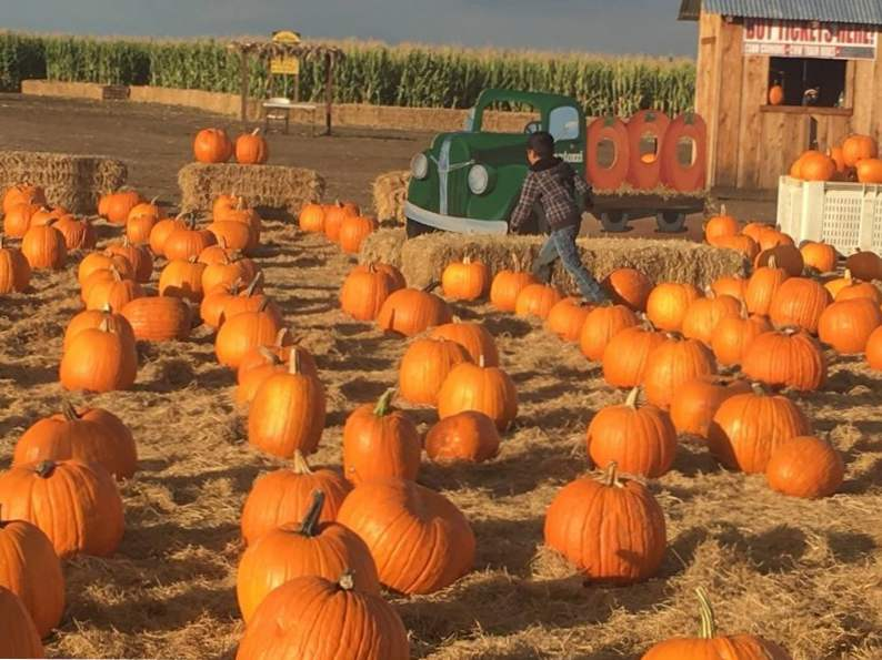 8 ways to celebrate halloween in northern california 5