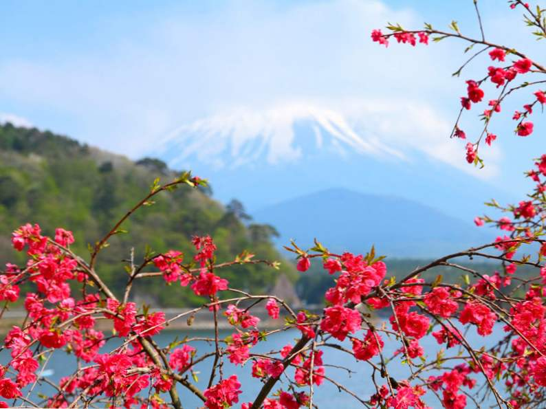 9 best places in japan to see cherry blossoms