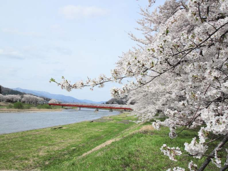 9 best places in japan to see cherry blossoms 5