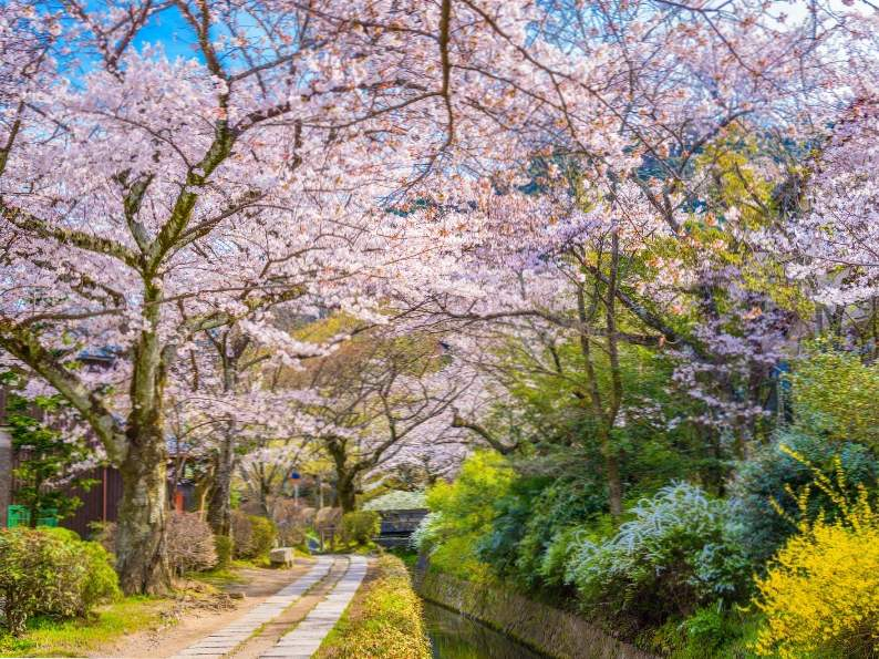 9 best places in japan to see cherry blossoms 6