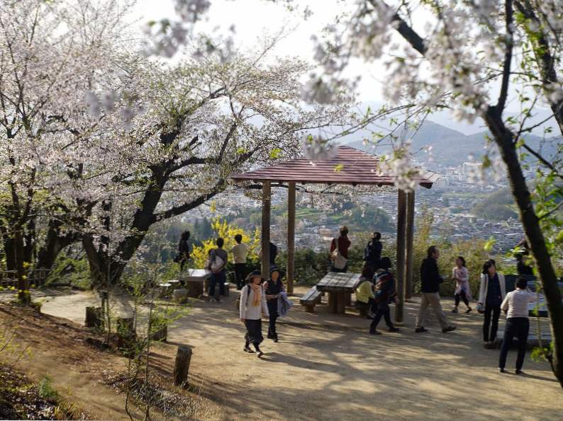 9 best places in japan to see cherry blossoms 7