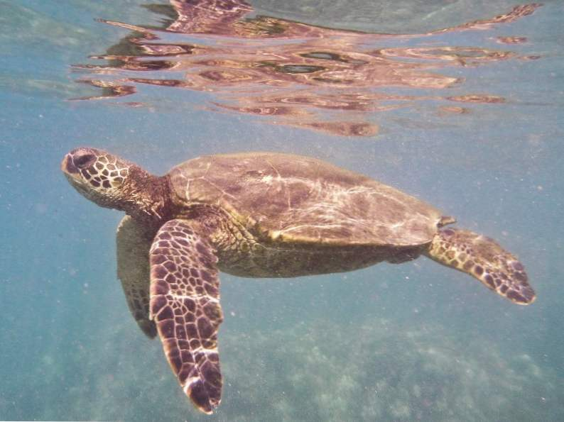 9 best places to snorkel in hawaii 4