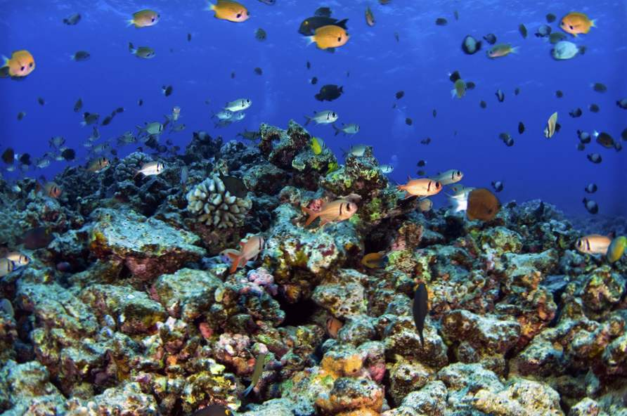 9 best places to snorkel in hawaii 7