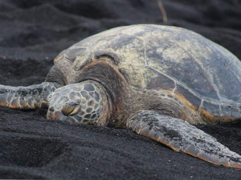 9 best things to do in hawaii 6