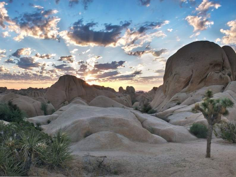 9 best things to do in joshua tree national park