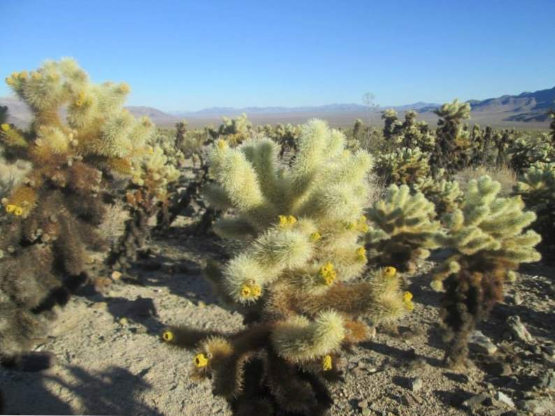 9 best things to do in joshua tree national park 5