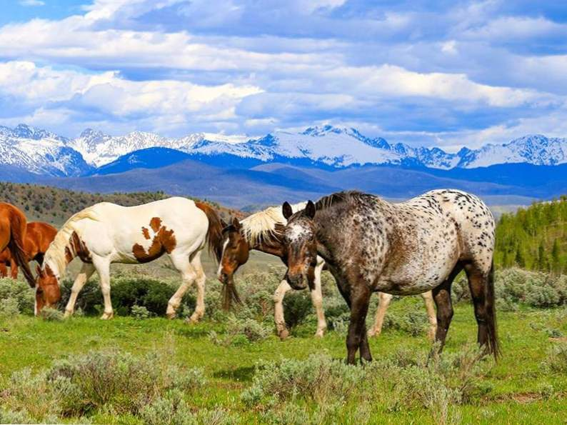 9 top luxury wilderness ranch vacations 6