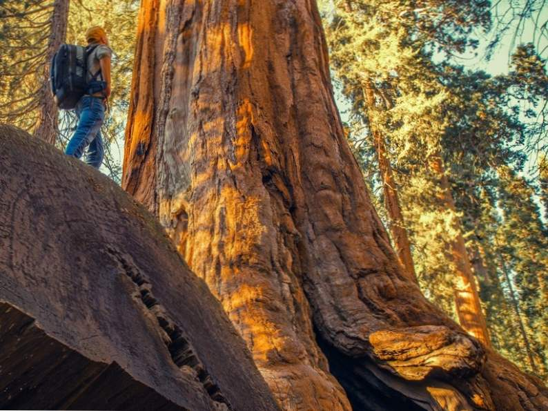 discover sequoia kings canyon national parks of california