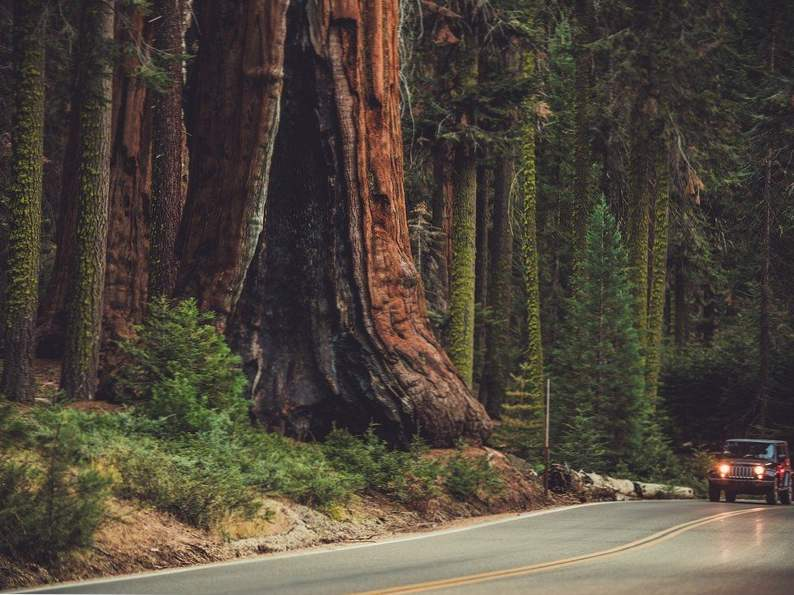 discover sequoia kings canyon national parks of california 2