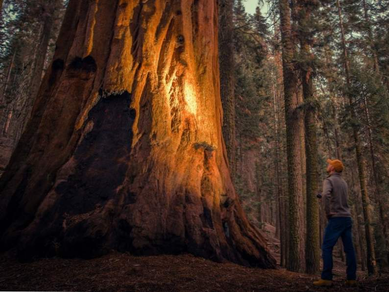 discover sequoia kings canyon national parks of california 4