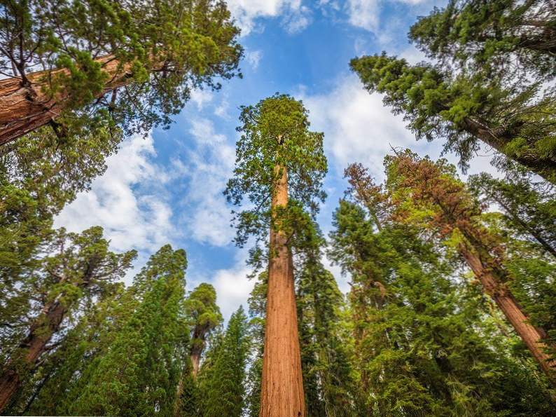 discover sequoia kings canyon national parks of california 5
