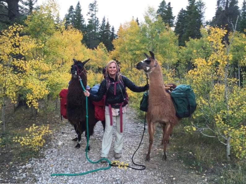 experience llama llama ding dong hikes in the rockies