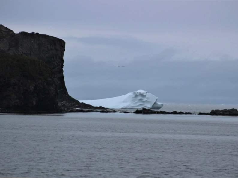 st anthony newfoundlands unique iceberg festival 2