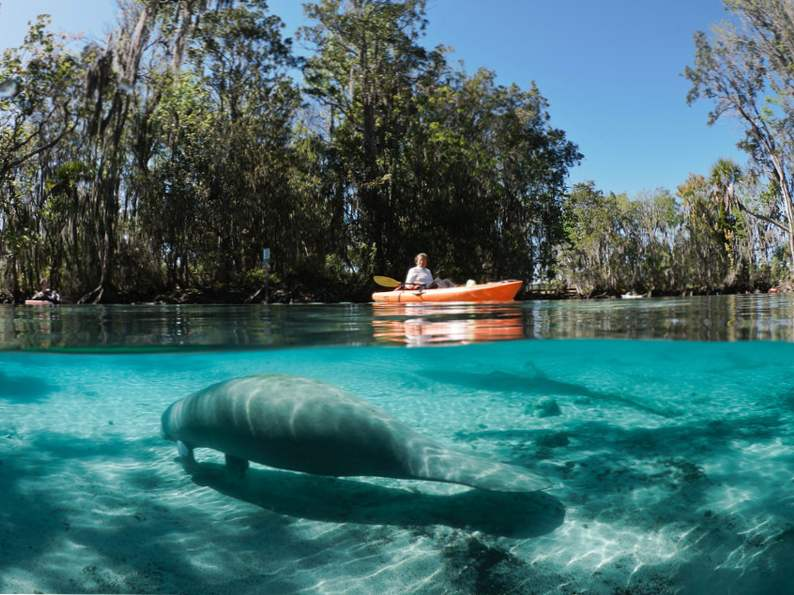 swim with manatees at this stunning natural spring in florida