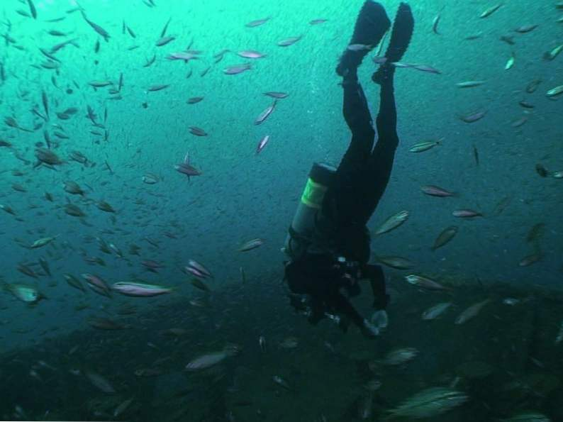 the panhandle dive trail in florida is full of shipwrecks