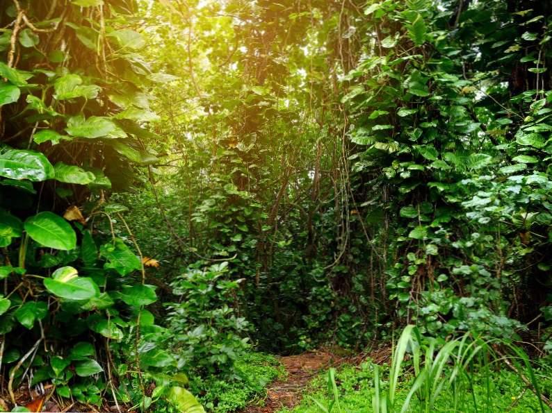 top 10 best things to do on kauai 4
