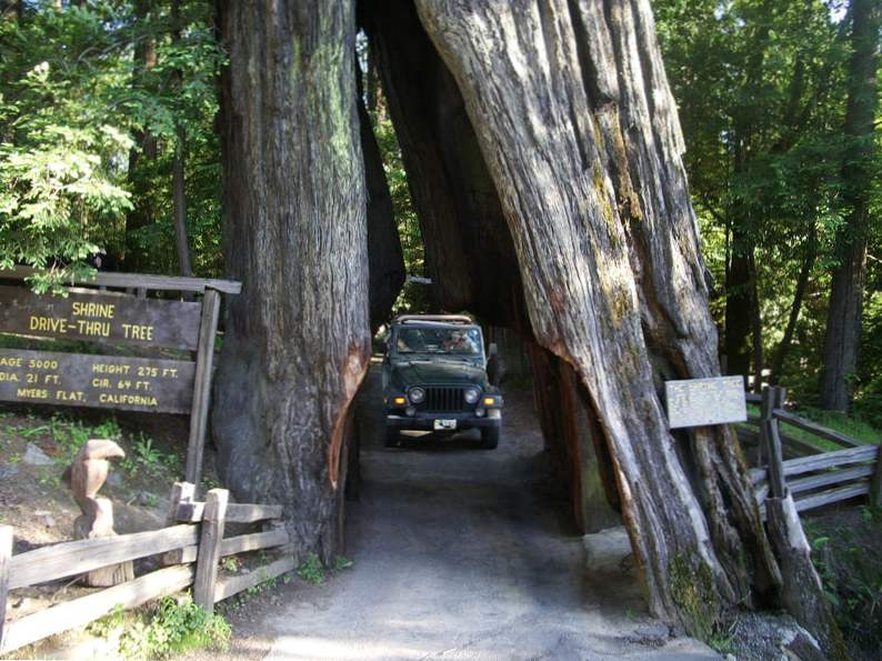 top 10 stops on a california road trip with the kids