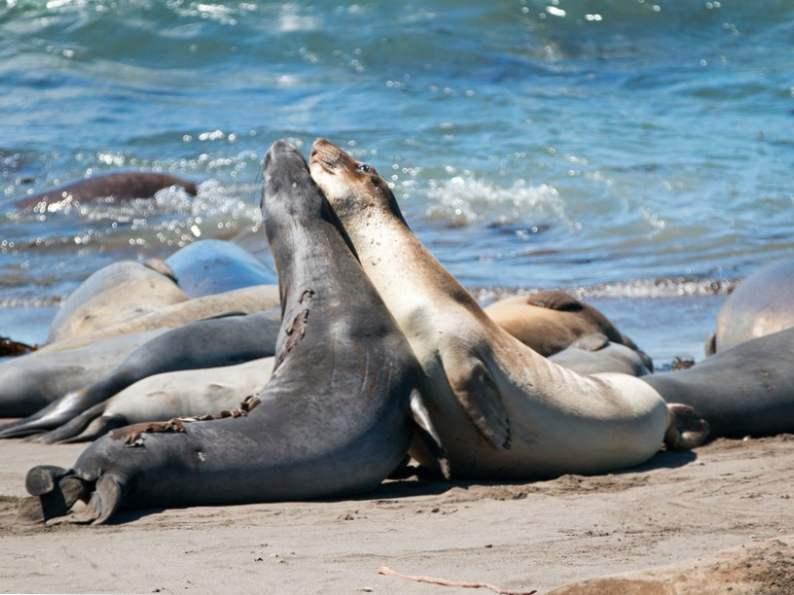top 8 sightseeing stops along californias central coast 6