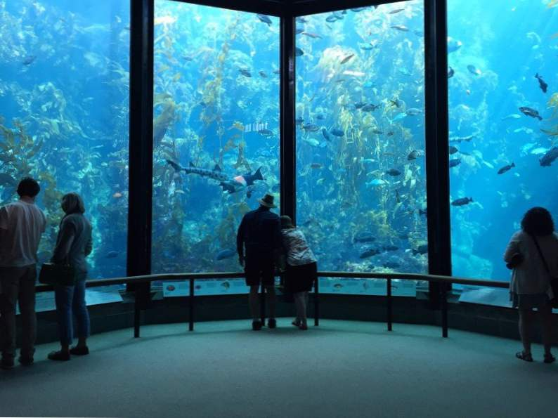 top 8 things to do in monterey california