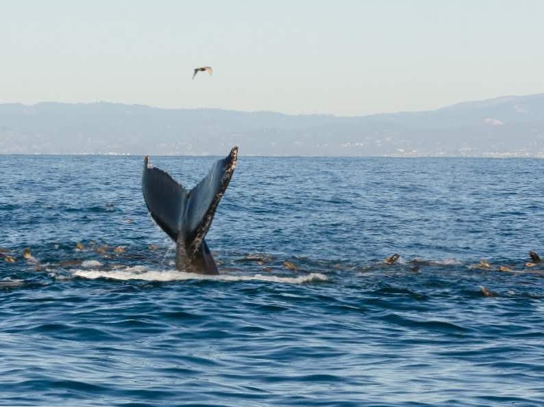 top 8 things to do in monterey california 5