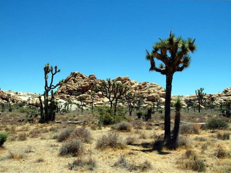 top 9 things to do around palm springs california 8
